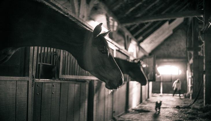 Tumbal-tumbal yang Menjadi Korban Kesuksesan Kuda Hitam